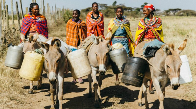 Investigation: Crime Thrives in Botswana's Donkey Skin Trade